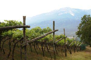 das nächste Weingut, der Moar Hof