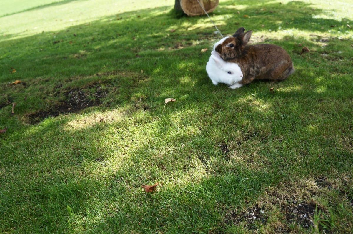 niedliche Kaninchen im Garten