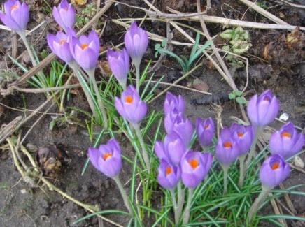 Foråret er på vej og dermed havesæsonen