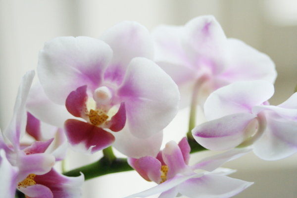 Orkideer er nemme