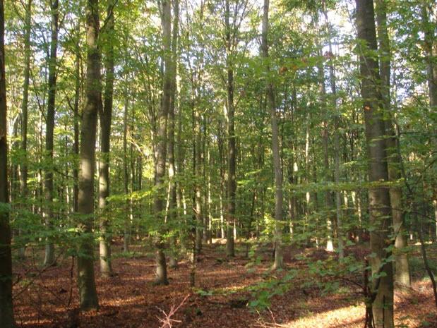 Skov i Sorø