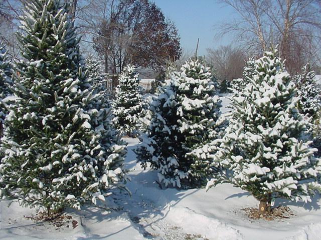 Juleboder med pyntegrønt