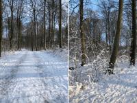 Vinter i Dianalund