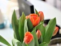 Parnas fejrer Mors Dag d. 9. maj