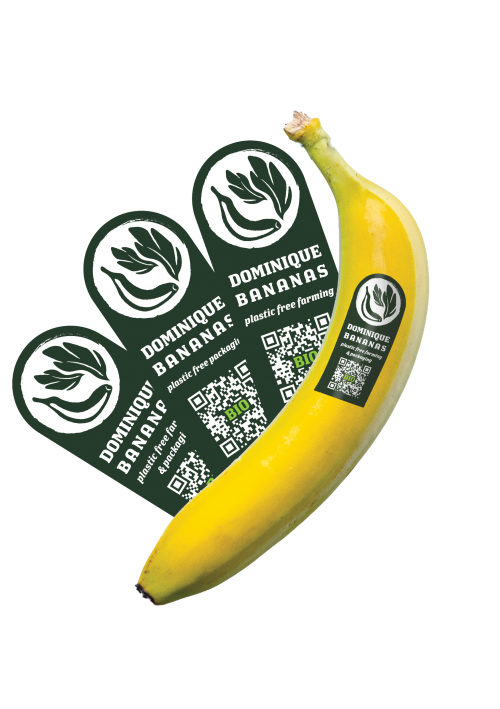 Banana with Sticker_clear