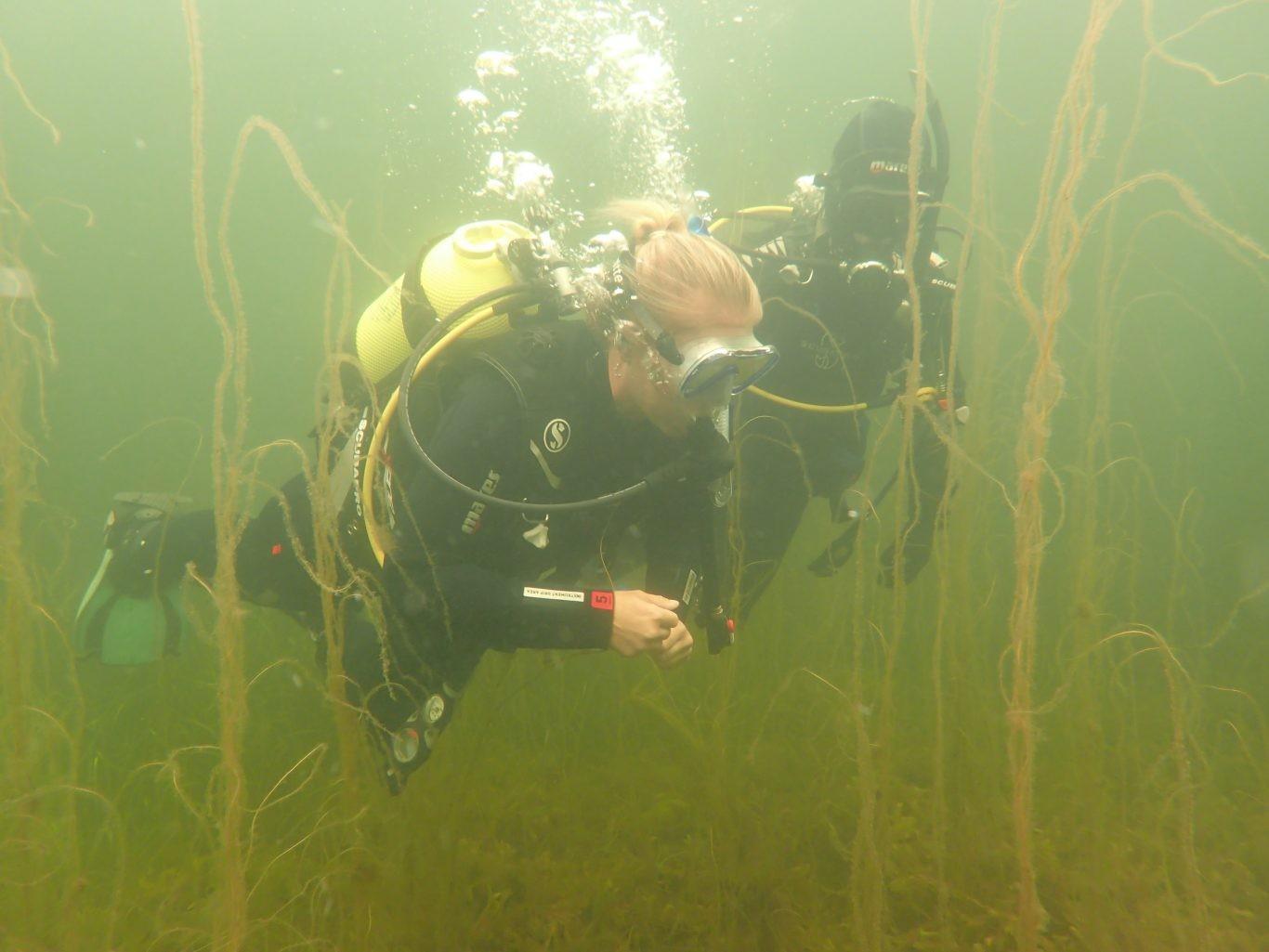 dykkereidk