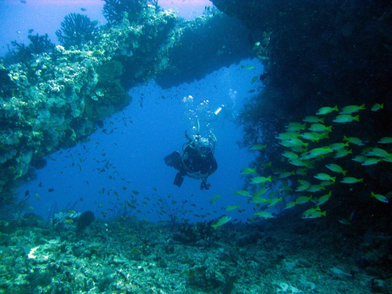 Dykkercertifikat