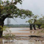 Ondergelopen woud in Cuyabeno Amazone Reservaat Ecuador