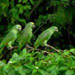 Papagaaien in het oerwoud