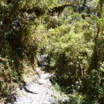 Nevelwoud van Podocarpus in loja