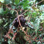 Wolaap in Merazonia dierenopvang centrum in Ecuador