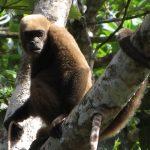 Wolaap in Amazone tour Ecuador
