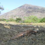 Leguaan en vulkaan