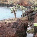 Cactussen op de Galapagos