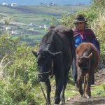 Ancestor trekking Ecuador