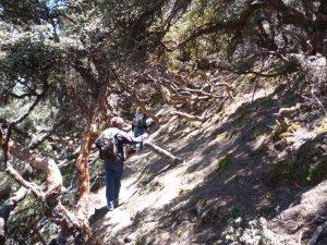 Polylepis trektocht Andesgebergte Ecuador