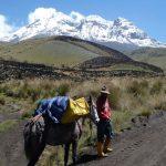 Vicuña trektocht #ecuadorrondreizen