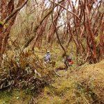 Polylepis bomen in Cajas tour Cuenca