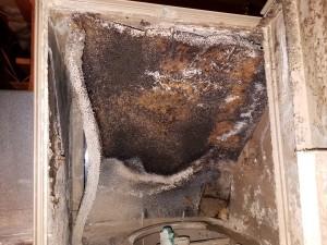 Moldy Humidifier