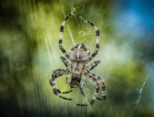 Arachnofobie - angst voor spinnen