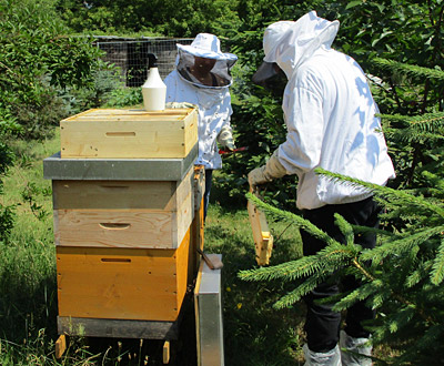 Wilfried Kuß and his daughter Anke have been keeping bees at Vattenfalls premises in Berlin since 2013