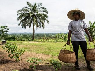 Eni Congo aims to promote food security as well as economic growth and diversification, in accordance with the Sustainable Development Goals of the United Nations 2030 Agenda (photo: Eni)