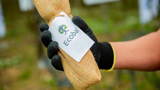With the mission of preserving and revitalising forests in Europe, Samskip is partnering with Ecobal, an organisation that helps companies to offset their carbon footprint and contribute towards a healthier natural environment