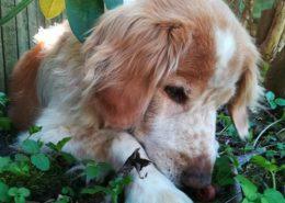 Erlinng Chriistensen - snubbi i haven