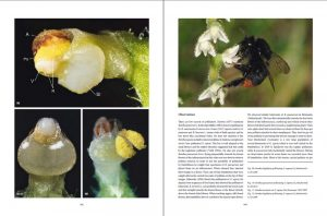 """sample pages """"The flower of the European orchid - Form and function"""" 164-165"""