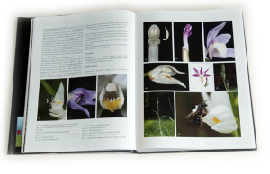 """sample pages """"The flower of the European orchid - Form and function"""" 62-63"""