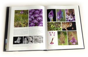 """sample pages """"The flower of the European orchid - Form and function"""" 208-209"""
