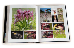 """sample pages """"The flower of the European orchid - Form and function"""" 326-327"""
