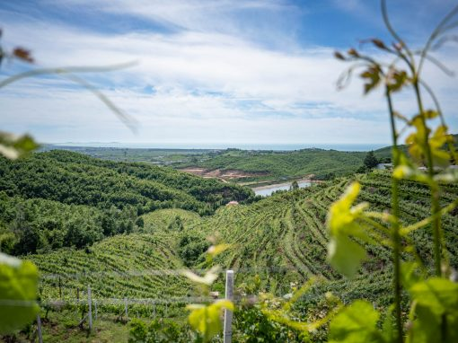 Gjiri i Lalzit Wine & Culinary Tour
