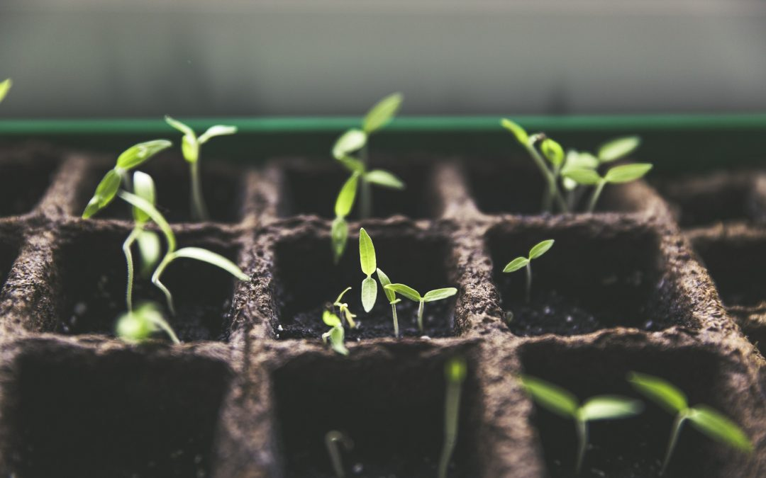 New session about sustainable gardening