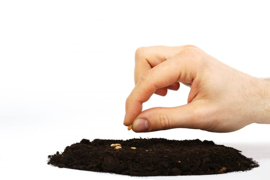 The soil of your heart