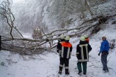 Schneebruch 2010