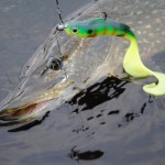 Pike caught Fishing in Sweden with Westin Monster Teez