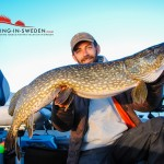 Big pike in Sweden as bycatch caught while pelagic vertical jigging for zander.
