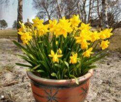 Jeg holder af hverdagen – og foråret