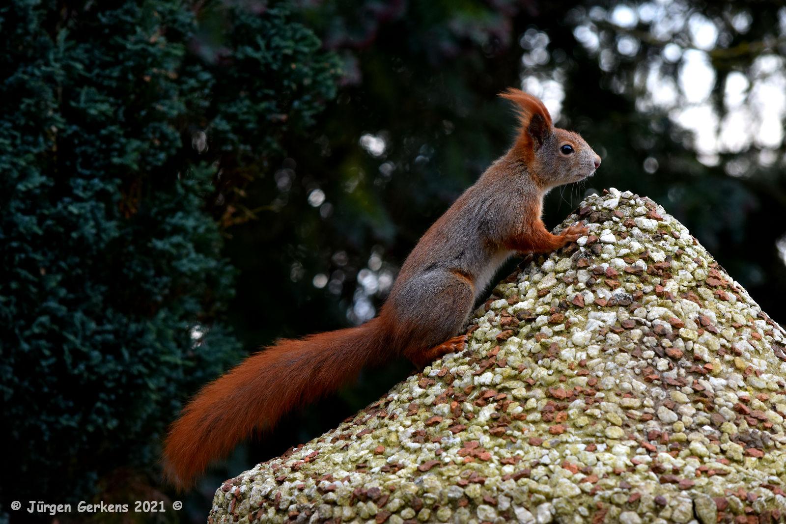 Hörnchen, gestern am Haus