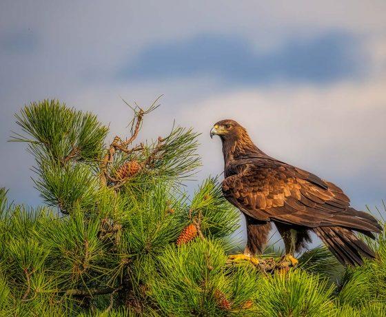 Fotografering Som Hobby Spanien Rovfugle 18