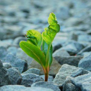 Modet att gå vidare växer som en planta ur marken. Susanne Sabith erbjuder dig stöttning för att komma tillbaka till livet.