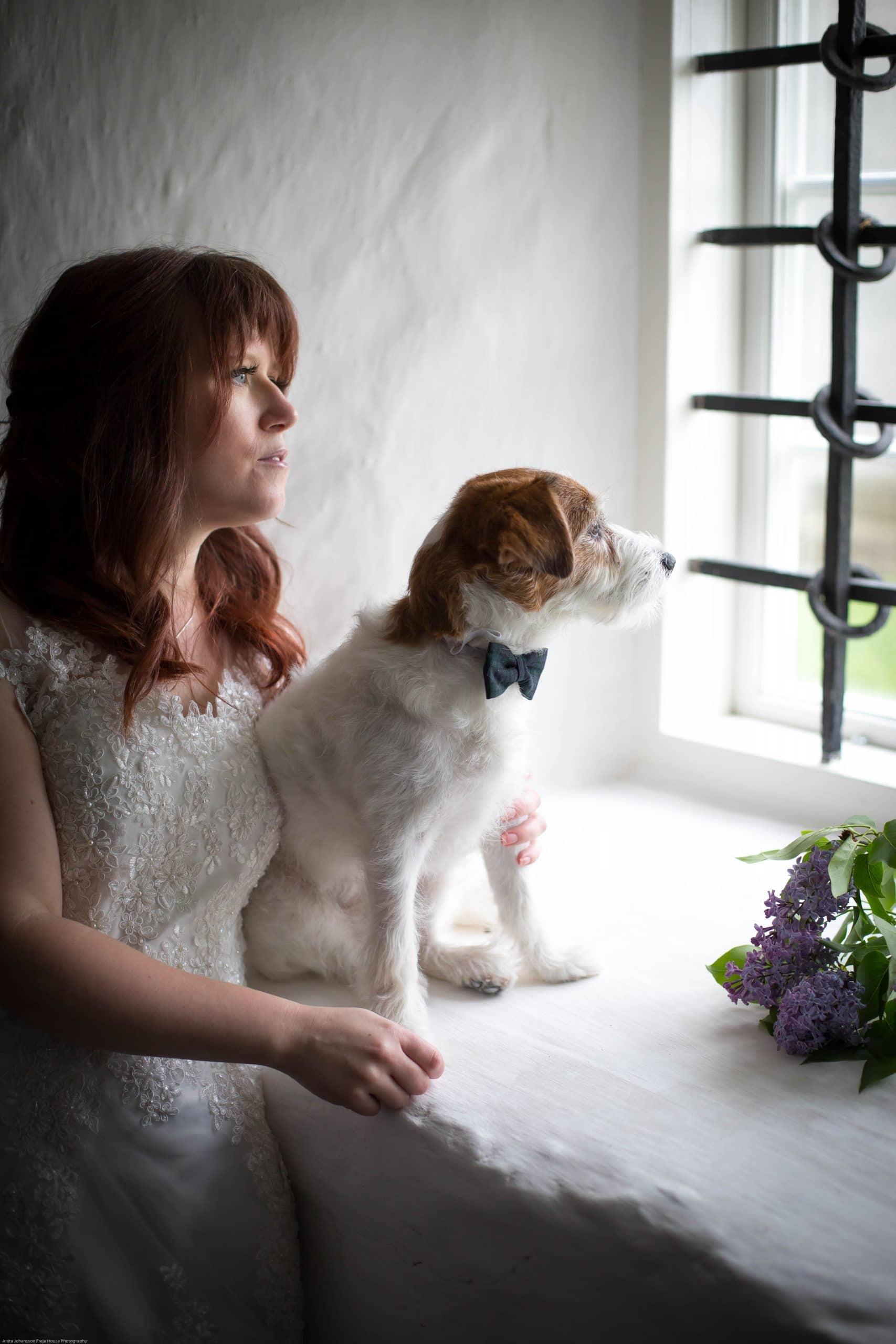 hundfoto russel terrier Frejahousphotography