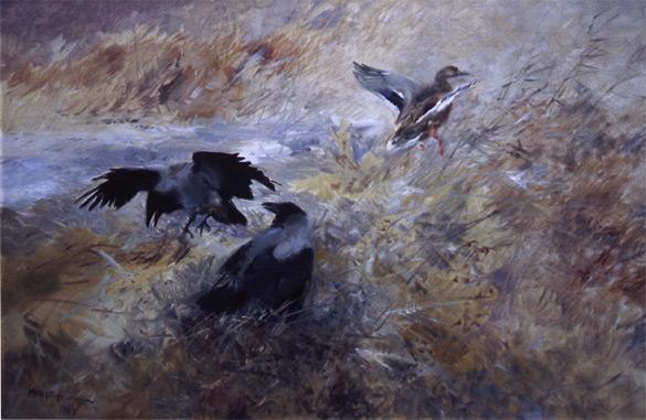 BILD: Målning av Vilhelm Jakob (Mosse) Stoopendaal med ett kråkpar som skrämmer upp en andhona för att plundra boet