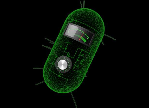 mit-bacteria-circuit