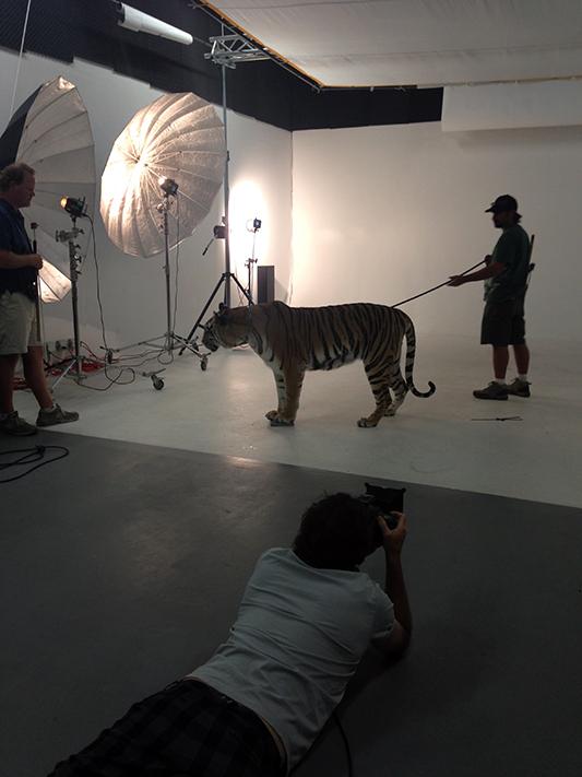 tigerNow