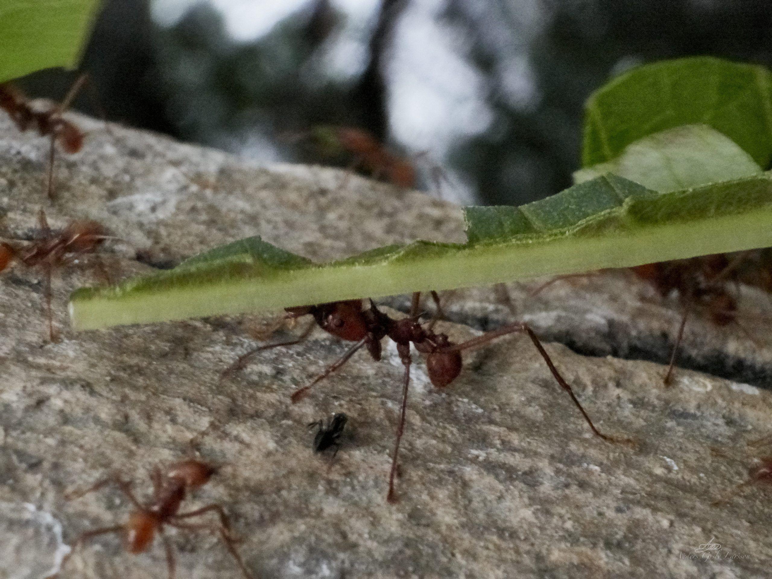 På myrens fodsti, Uge 19, Randers Regnskov, Randers