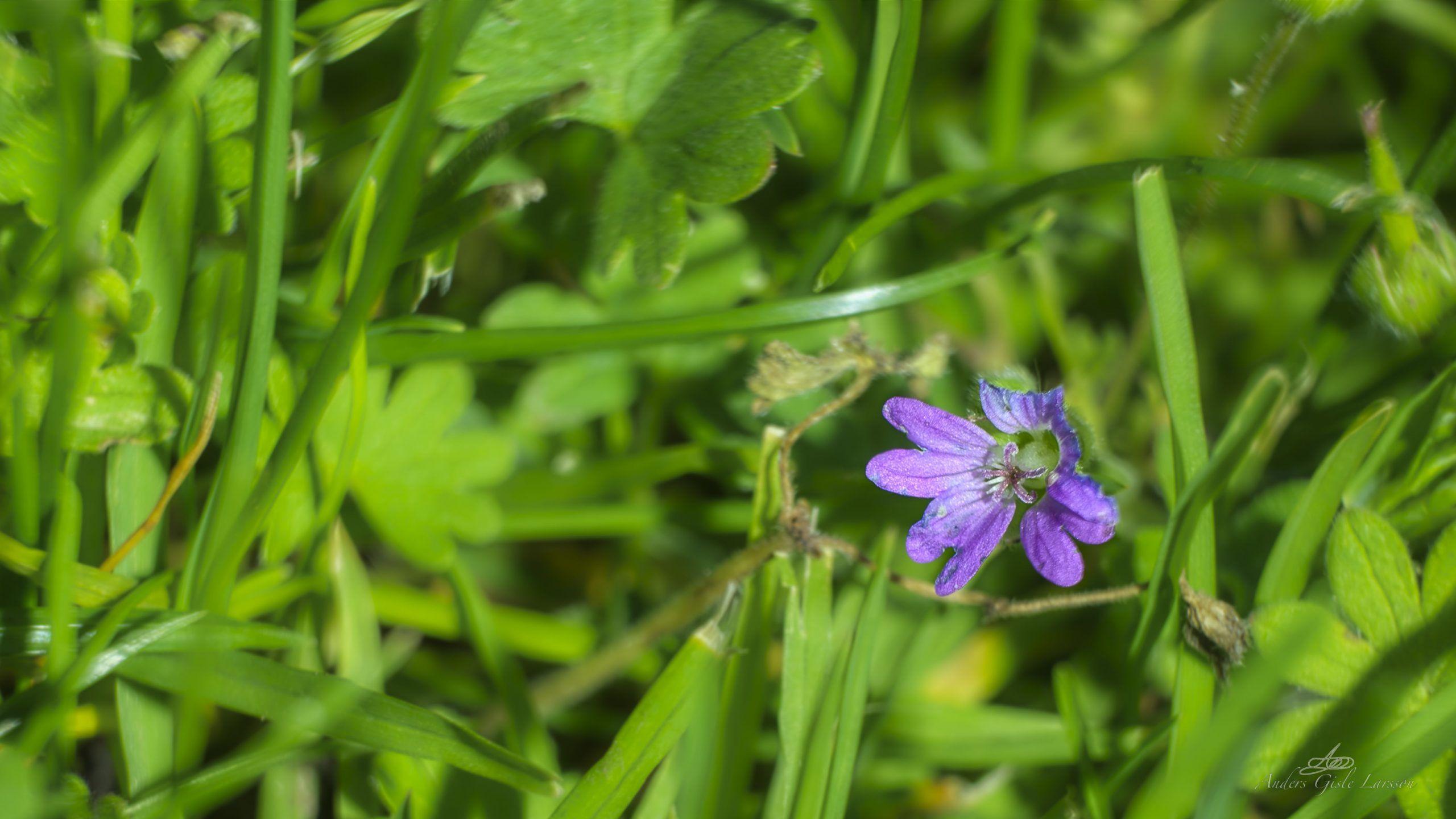Nede i græsset, Uge 37, Assentoft, Randers
