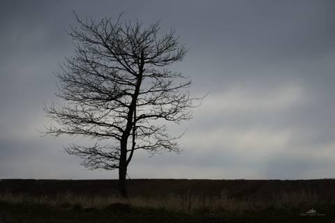 Nøgent træ