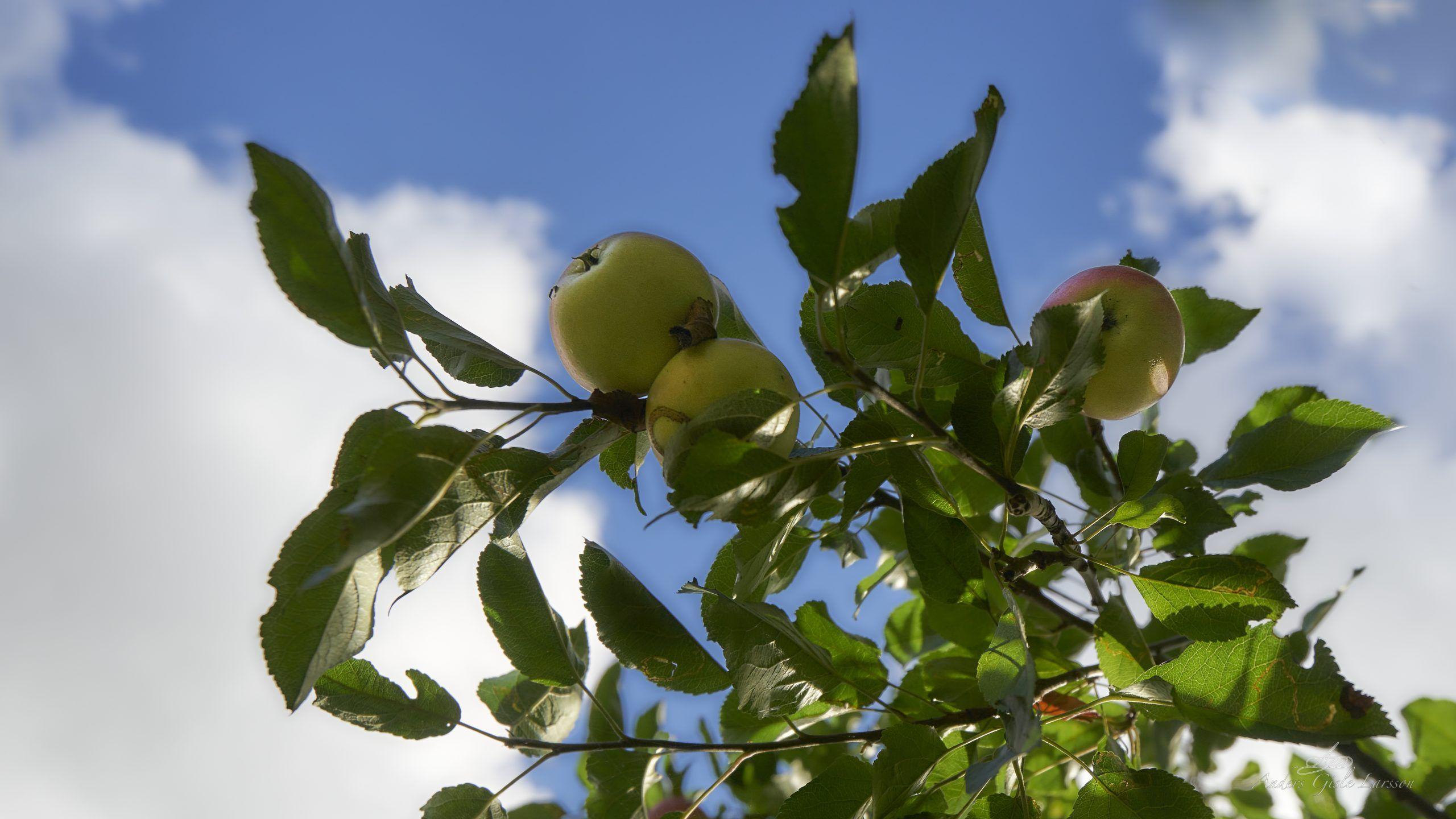 An apple a day….